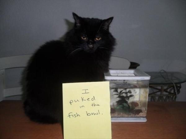 RoyReid.ca-Cat-Shaming-18-600x449