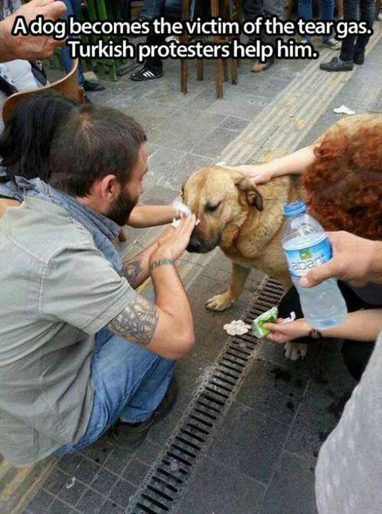 cool-protesters-helping-dog-eyes