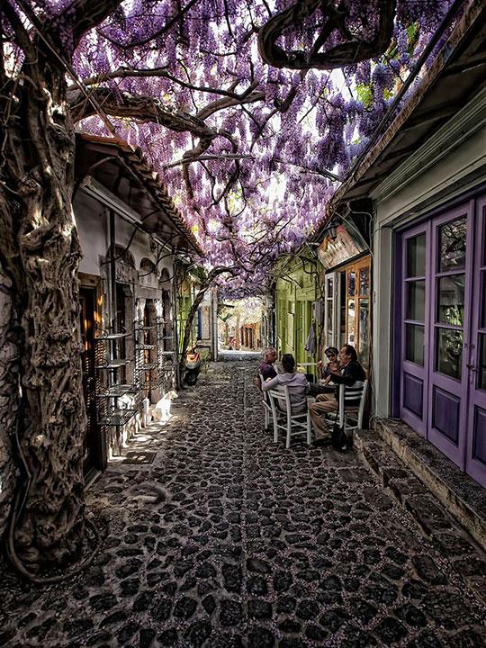 cool-street-flowers-tree-purple