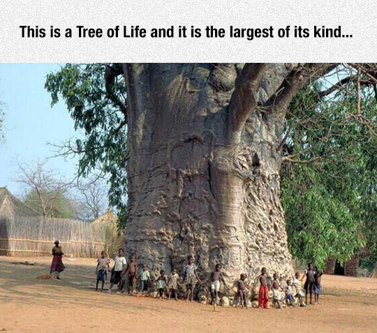 Majestic Tree Of Life