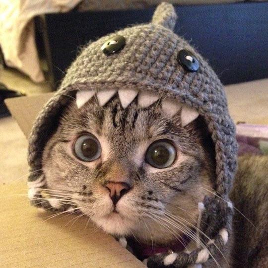 cute-cat-shark-hat-big-eyes