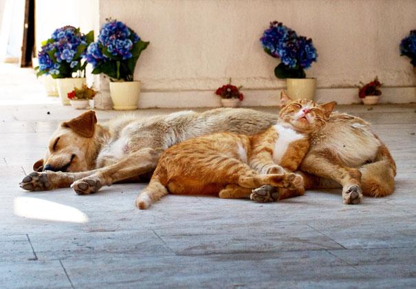 cute-cats-sleeping-on-dogs-21__605