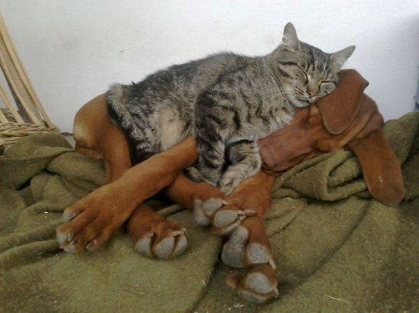 cute-cats-sleeping-on-dogs-30__605