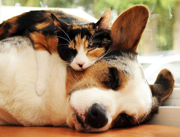 cute-cats-sleeping-on-dogs-31__605
