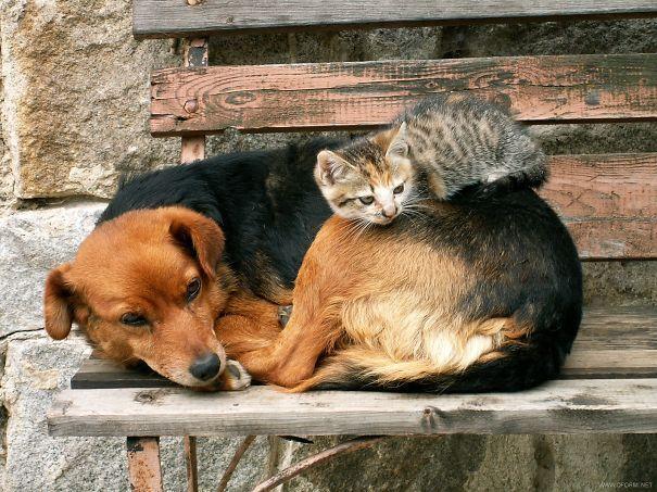 cute-cats-sleeping-on-dogs-3__605