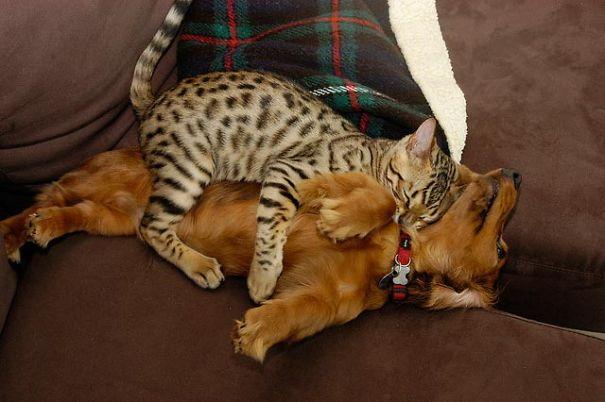 cute-cats-sleeping-on-dogs-6__605
