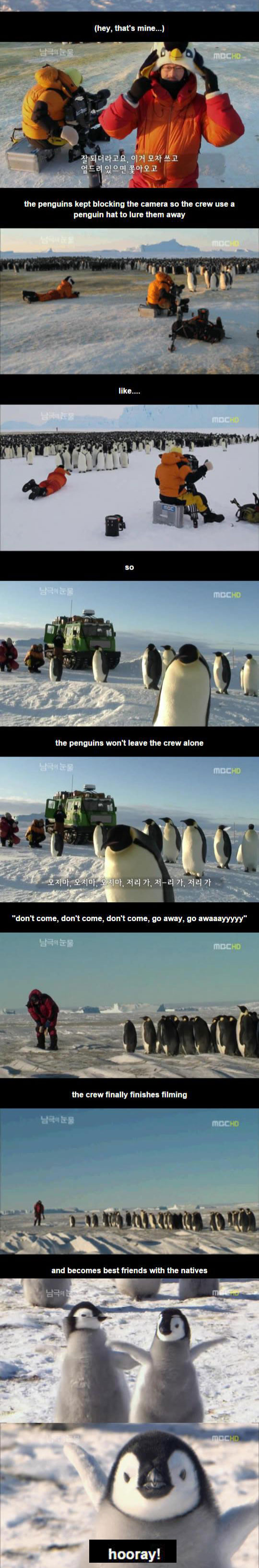 cute-penguin-film-crew-friends