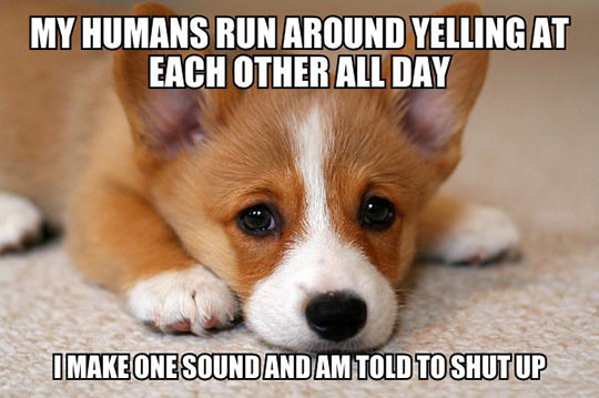 Canine Problems