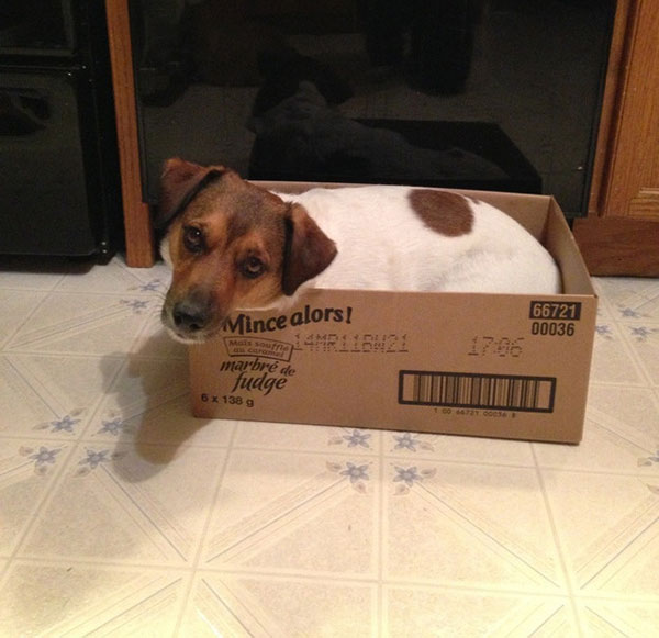dogs_who_think_they_are_cats_22
