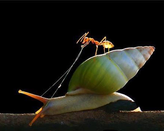 An Ant Riding A Snail