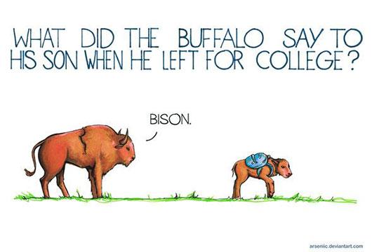funny-bison-cartoon-joke-bye