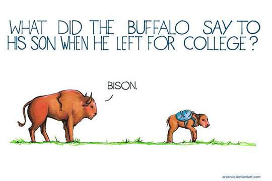 Bison Jokes Are The Best
