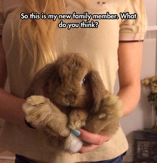 funny-bunny-new-family-member