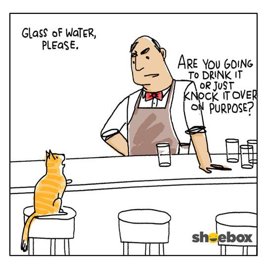 A Cat Walks Into A Bar