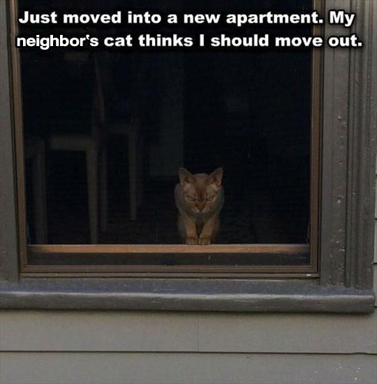 funny-cat-mad-neighbor-angry-eyes