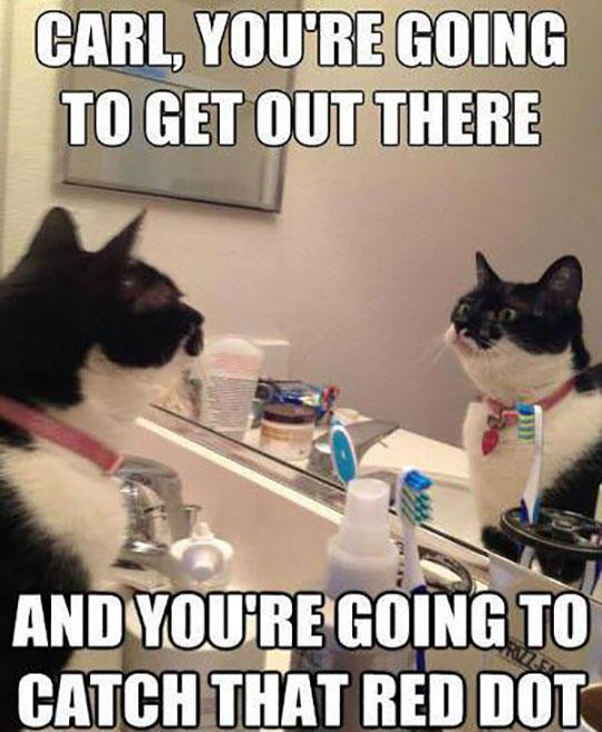 funny-cat-mirror-motivation-bathroom