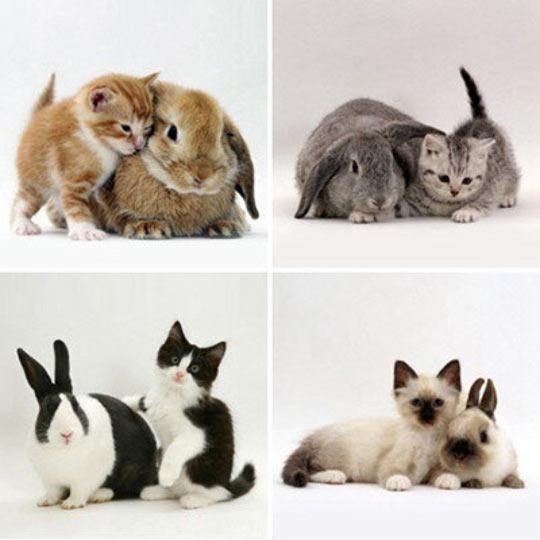 Cat And Rabbit Look Alikes