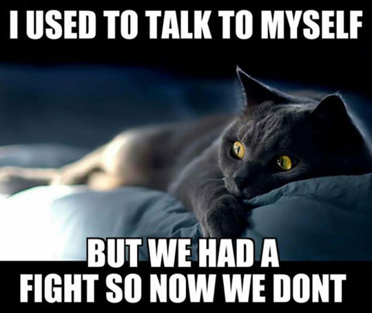 funny-cat-sleeping-bed-fight