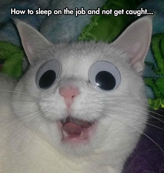 funny-cat-sleeping-googly-eyes