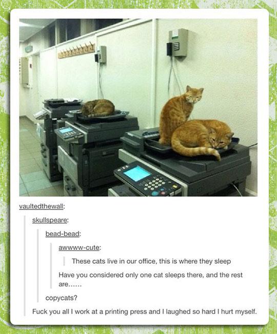 funny-copy-machine-cat-joke