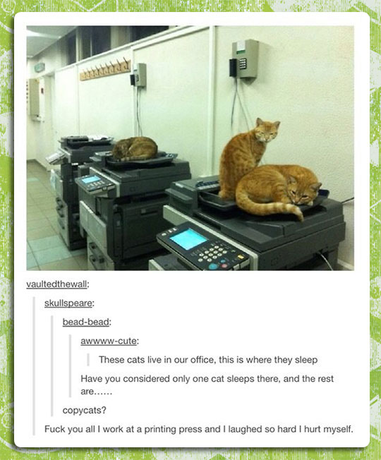 The Worst Kind Of Cats