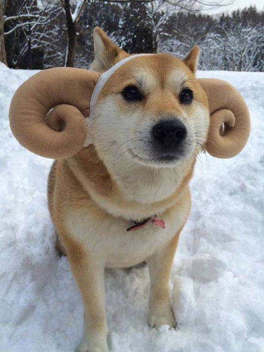 funny-dog-antlers-hat-snow