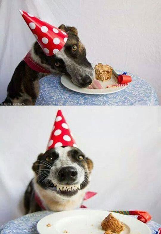 funny-dog-birthday-cake-hat-happy