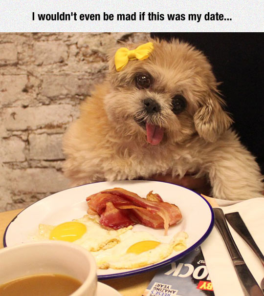funny-dog-date-egg-bar-bacon