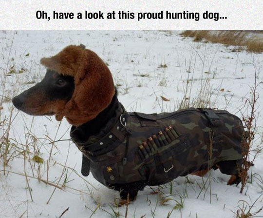 funny-dog-hunting-clothes-hat-winter