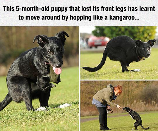 Hopping Like A Kangaroo