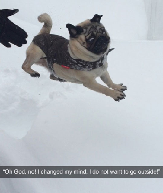 funny-dog-scared-face-jumping-snow
