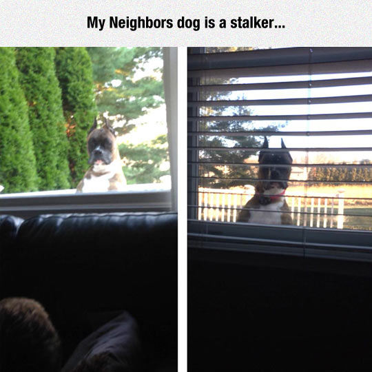 That Dog Is A Creep