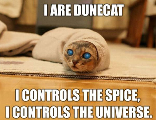 Dune Cat Is Here To Stay