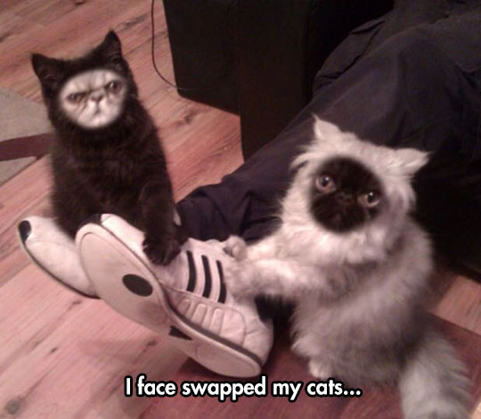 funny-face-swap-cats-black-white