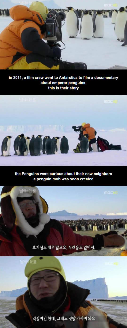 Curious Penguins Bothering Film Crew