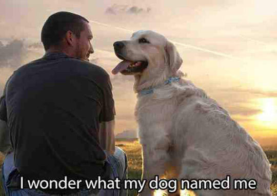 funny-man-owner-dog-name-each-other