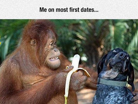 funny-monkey-banana-dog-scared