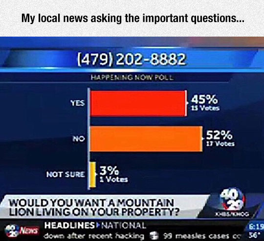 funny-news-poll-mountain-lion