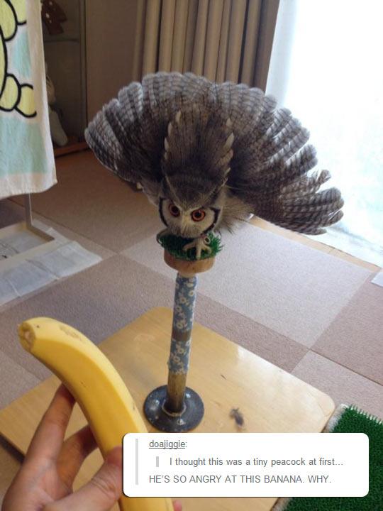 funny-owl-mad-banana-angry