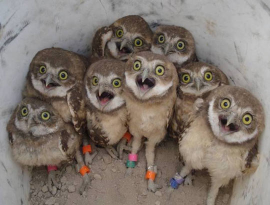 Excited Owls Are Funny