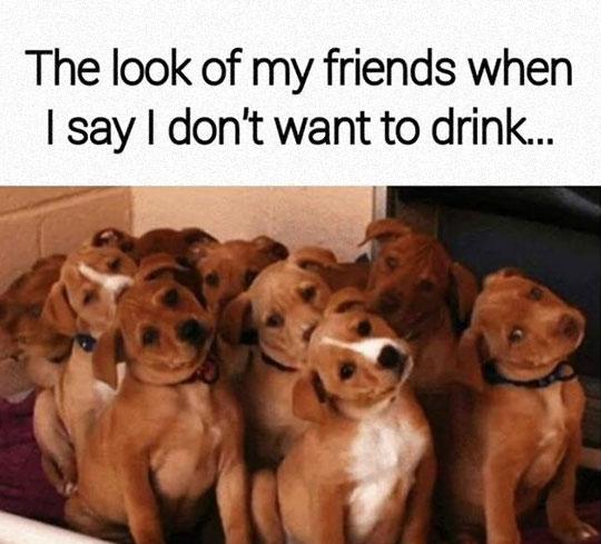 funny-puppies-tilted-head-weird.jpg