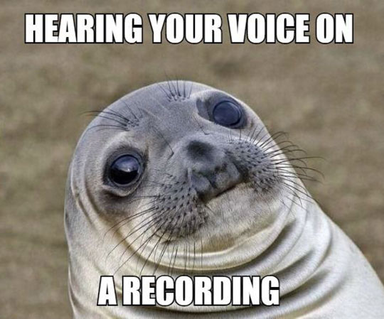 funny-seal-hearing-own-voice