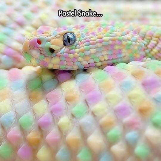 Beautiful Reptile Skin
