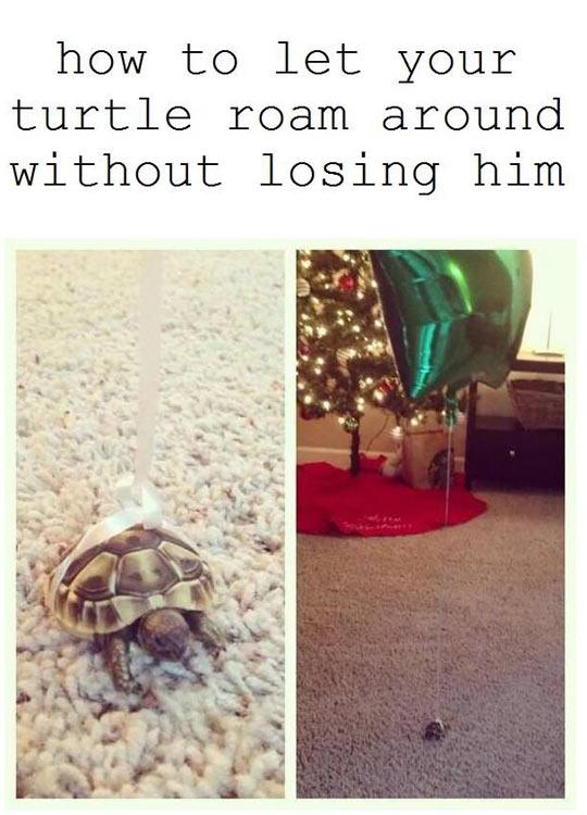 funny-turtle-roam-losing-balloon