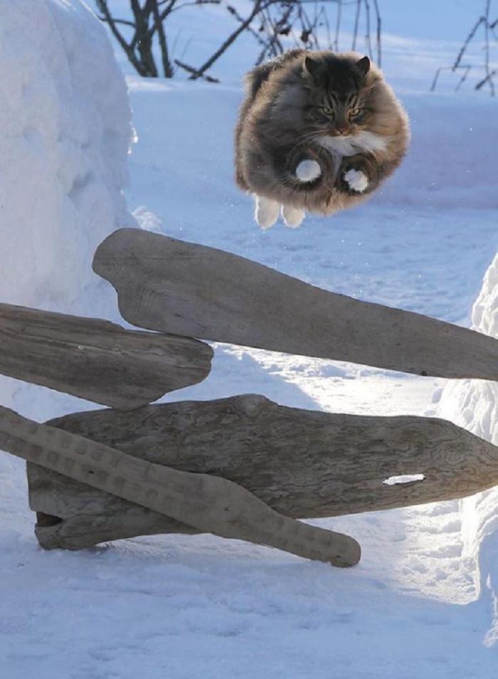 A majestic, soaring cat