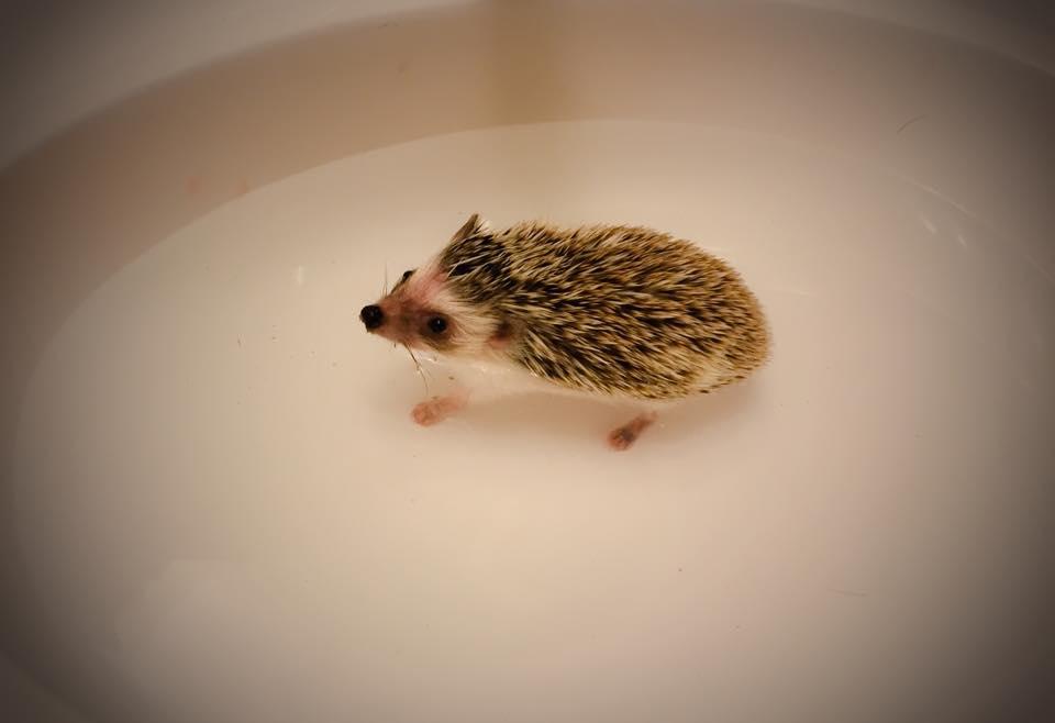 Bathtime for Bruce Quillis