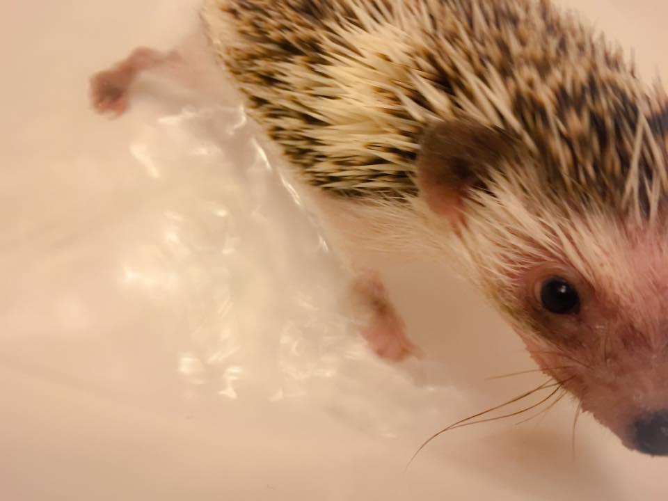 Bathtime for Bruce Quillis2