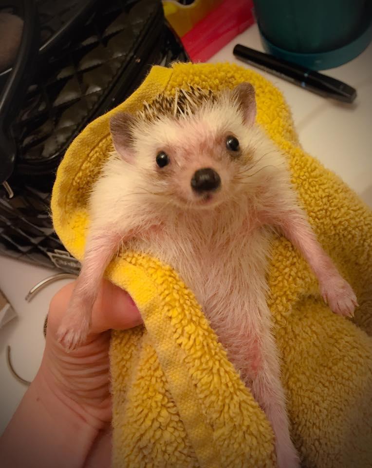 Bathtime for Bruce Quillis3