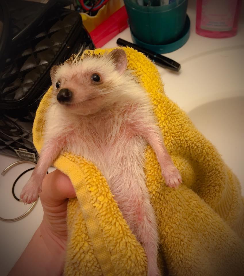 Bathtime for Bruce Quillis4