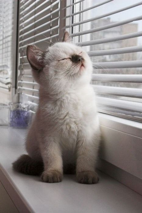 Contentment is a sunny window ledge